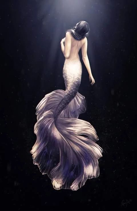 High Resolution Wallpaper   Mermaid 480x739 px