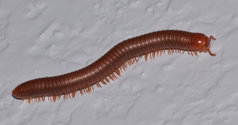 798x418 > Millipede Wallpapers