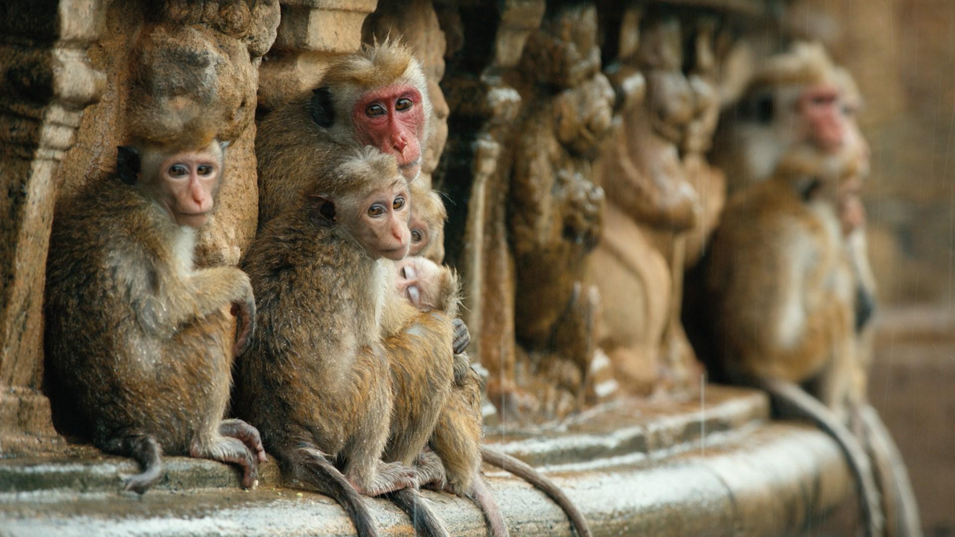 پادشاهی میمون ها (مستند)