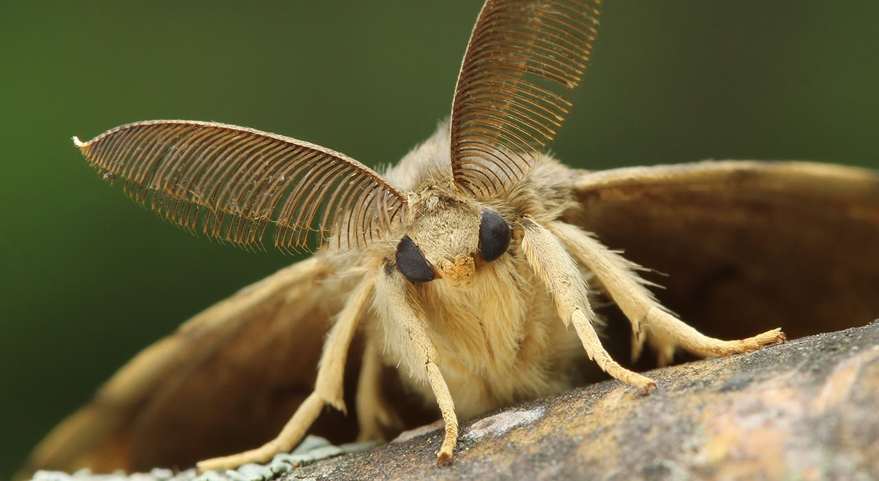 Nice wallpapers Moth 1280x700px
