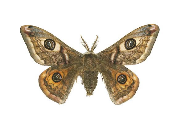 Moth Backgrounds, Compatible - PC, Mobile, Gadgets| 600x400 px