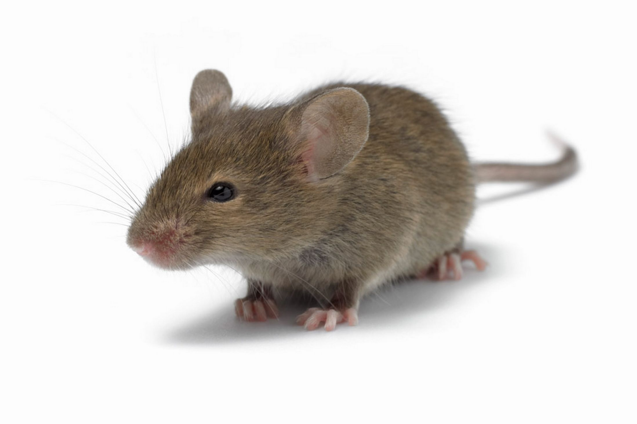Mouse Backgrounds on Wallpapers Vista