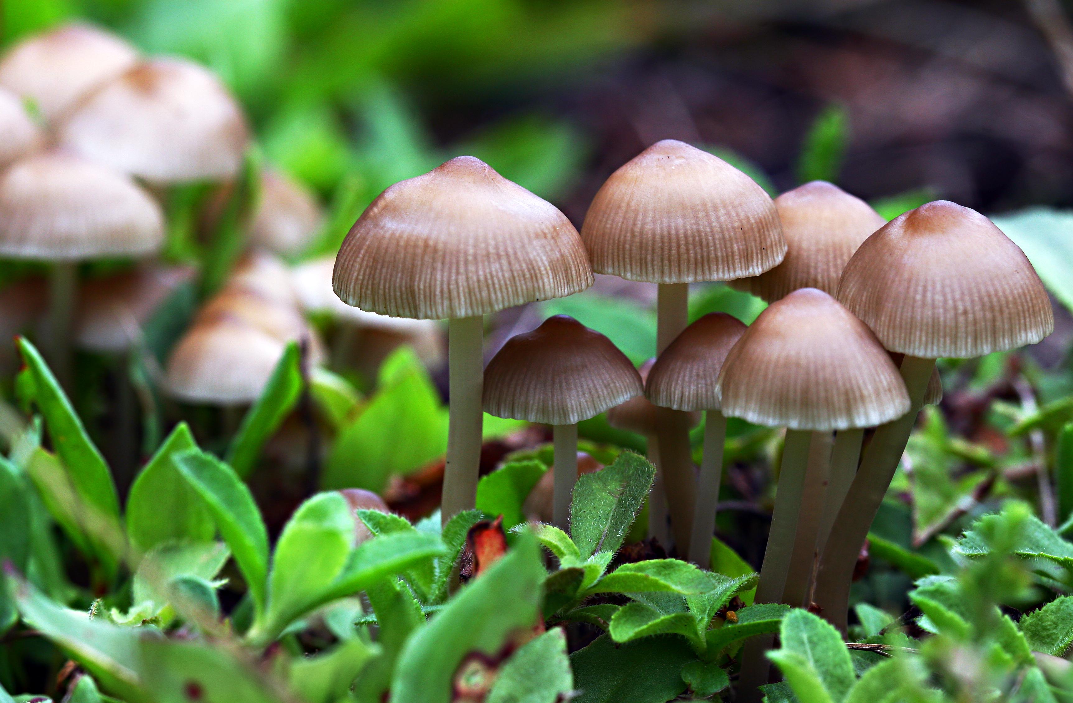 Mushroom #10