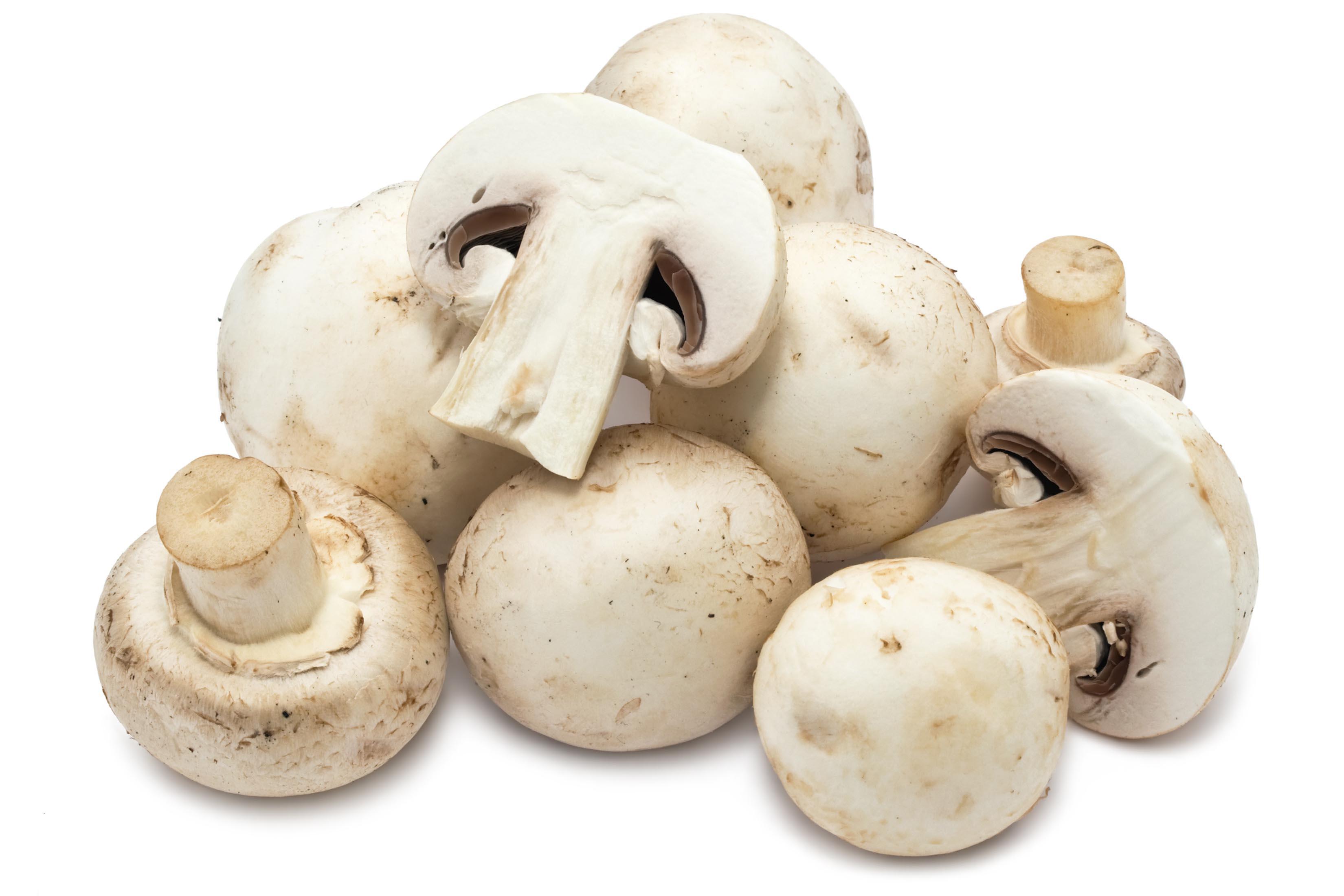 Mushroom #6