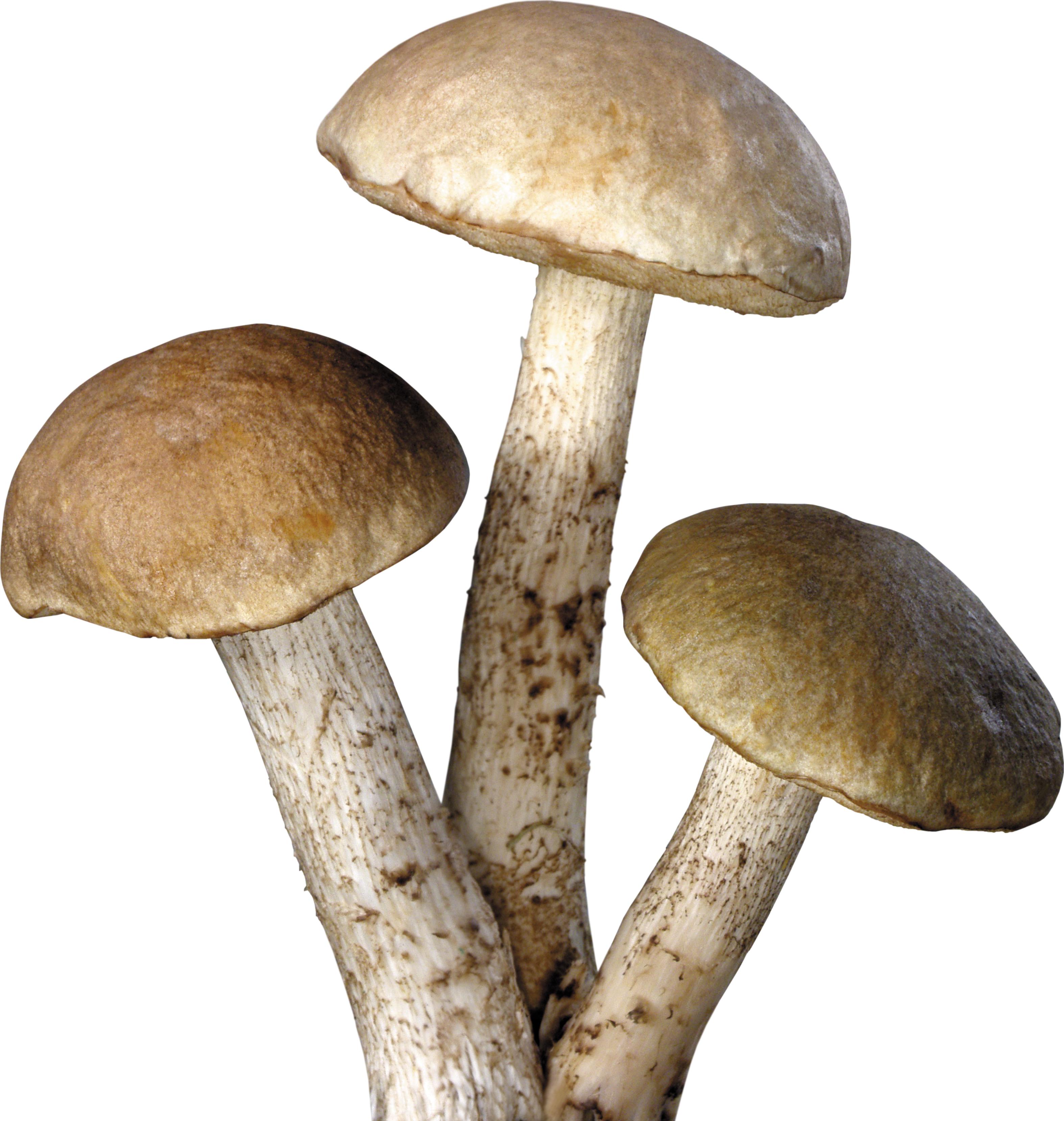 Mushroom #9