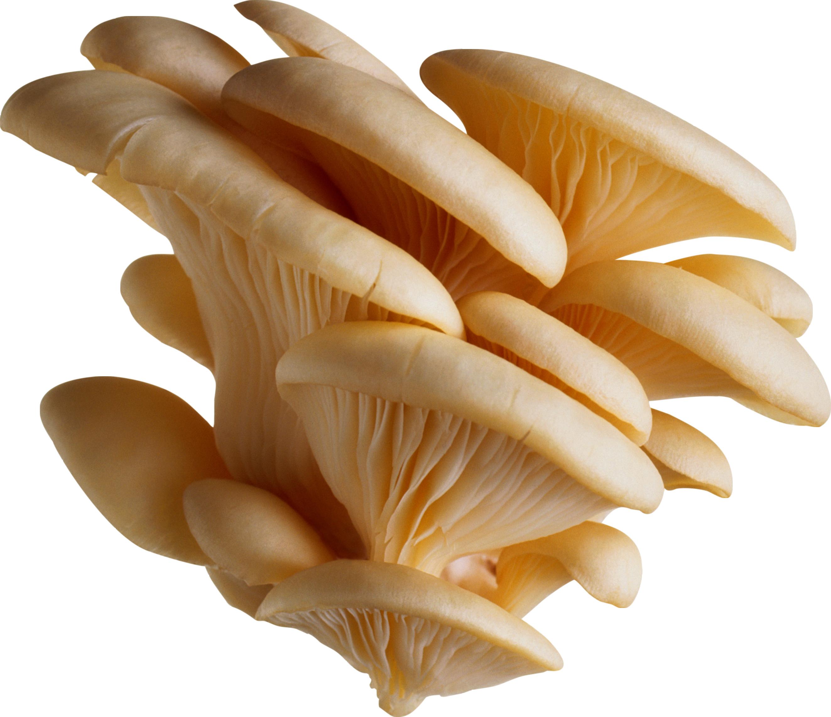 High Resolution Wallpaper | Mushroom 2646x2283 px
