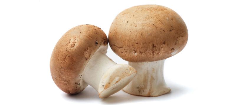 Mushroom HD wallpapers, Desktop wallpaper - most viewed