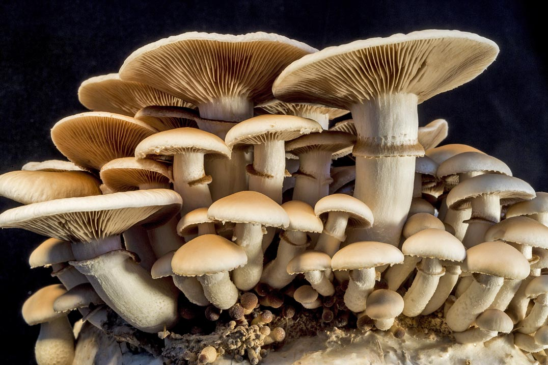 Amazing Mushroom Pictures & Backgrounds