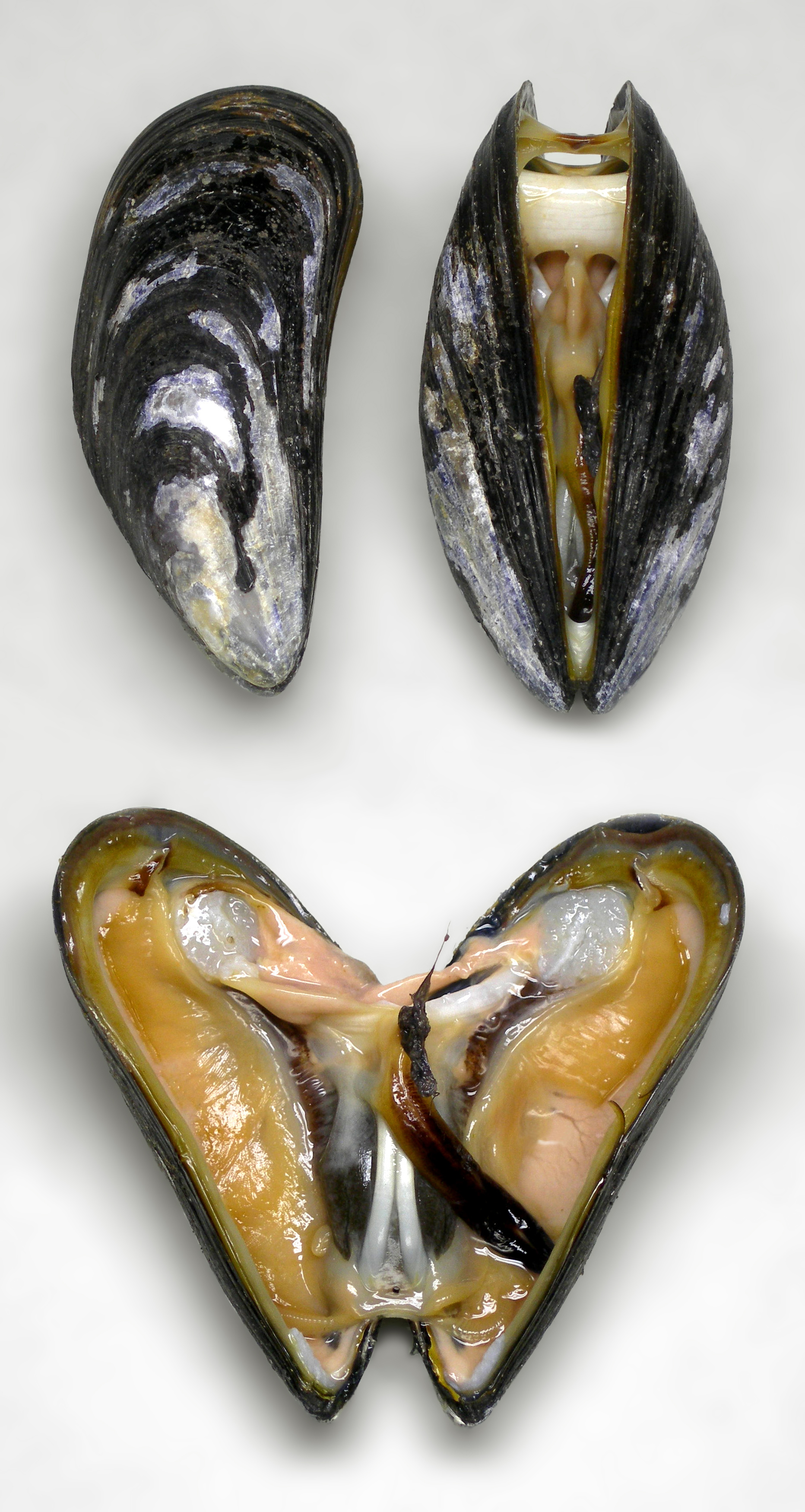HD Quality Wallpaper | Collection: Food, 1864x3500 Mussels