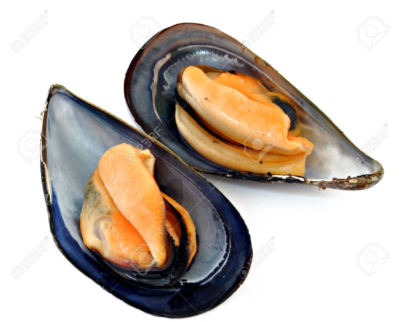 Images of Mussels | 1300x1044