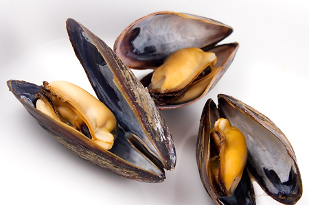 Nice wallpapers Mussels 450x299px