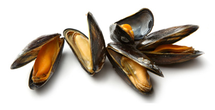 HD Quality Wallpaper | Collection: Food, 420x215 Mussels