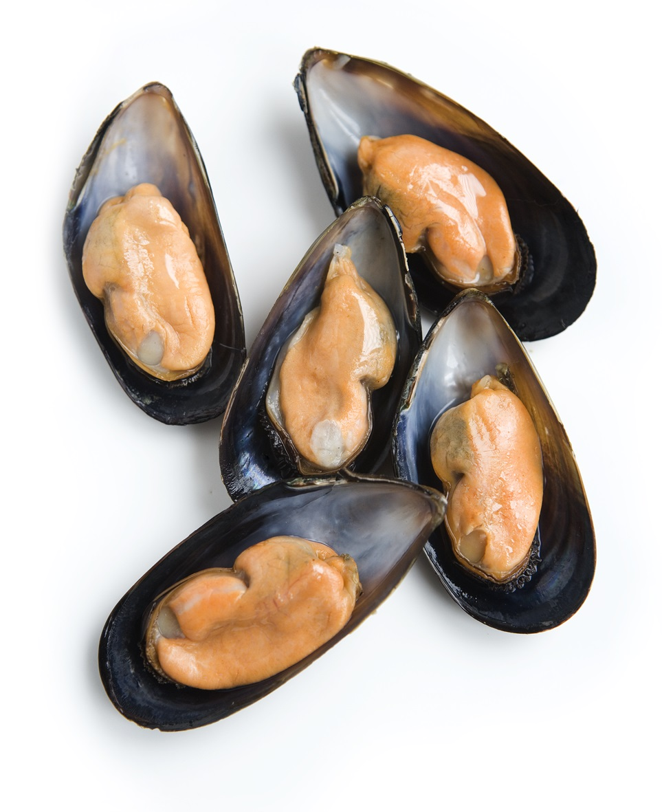 HQ Mussels Wallpapers | File 220.78Kb