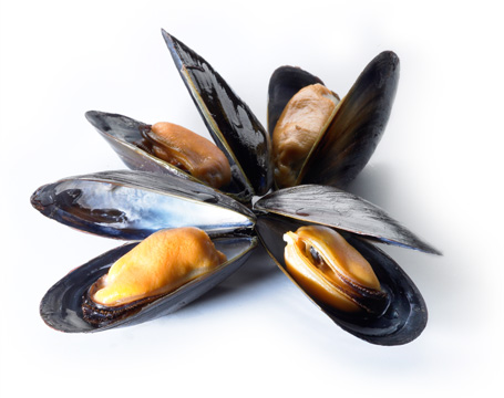 HD Quality Wallpaper | Collection: Food, 455x360 Mussels
