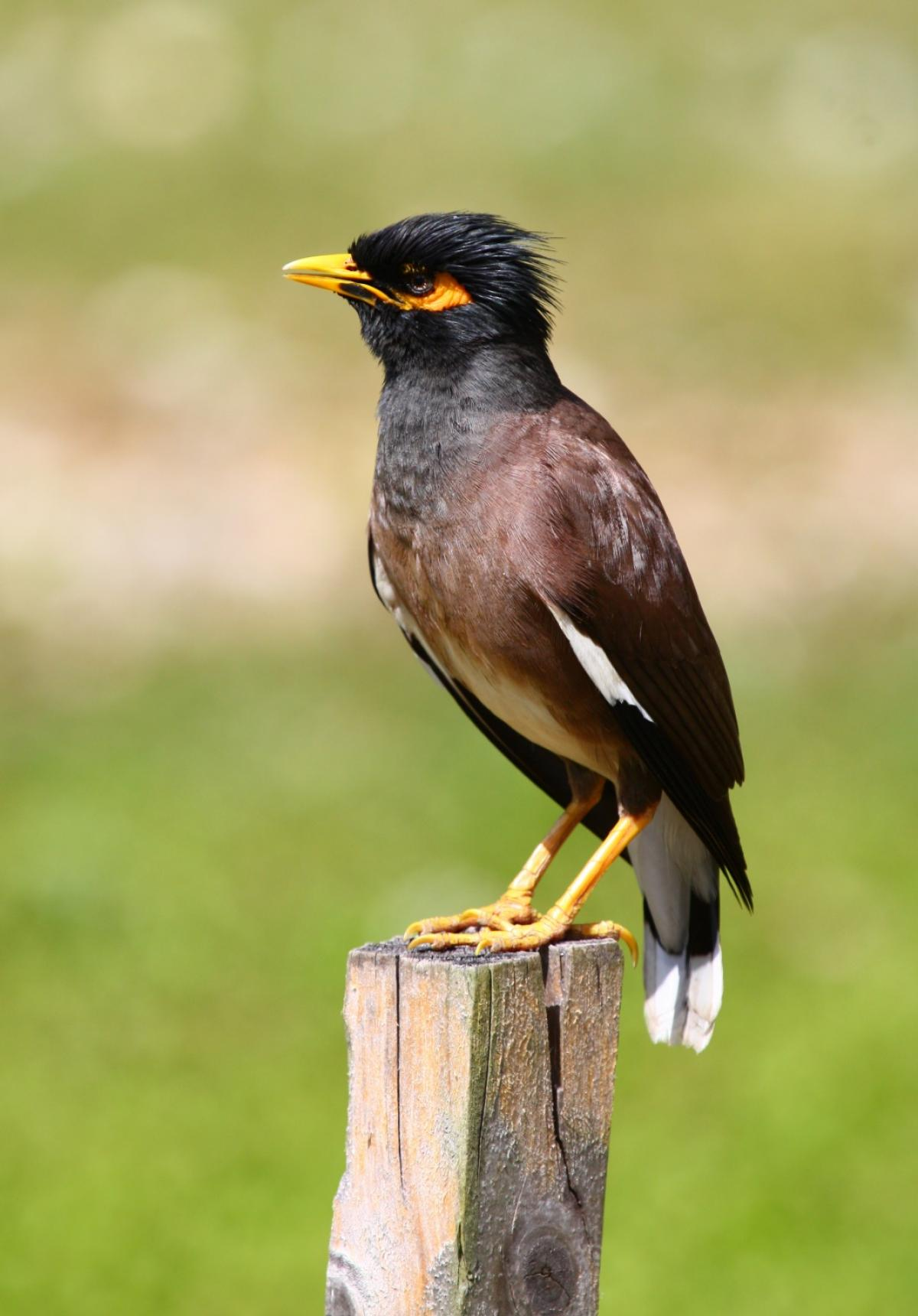 Images of Myna | 1200x1720
