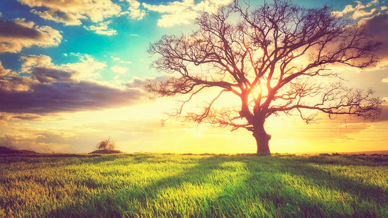 Nature Backgrounds on Wallpapers Vista