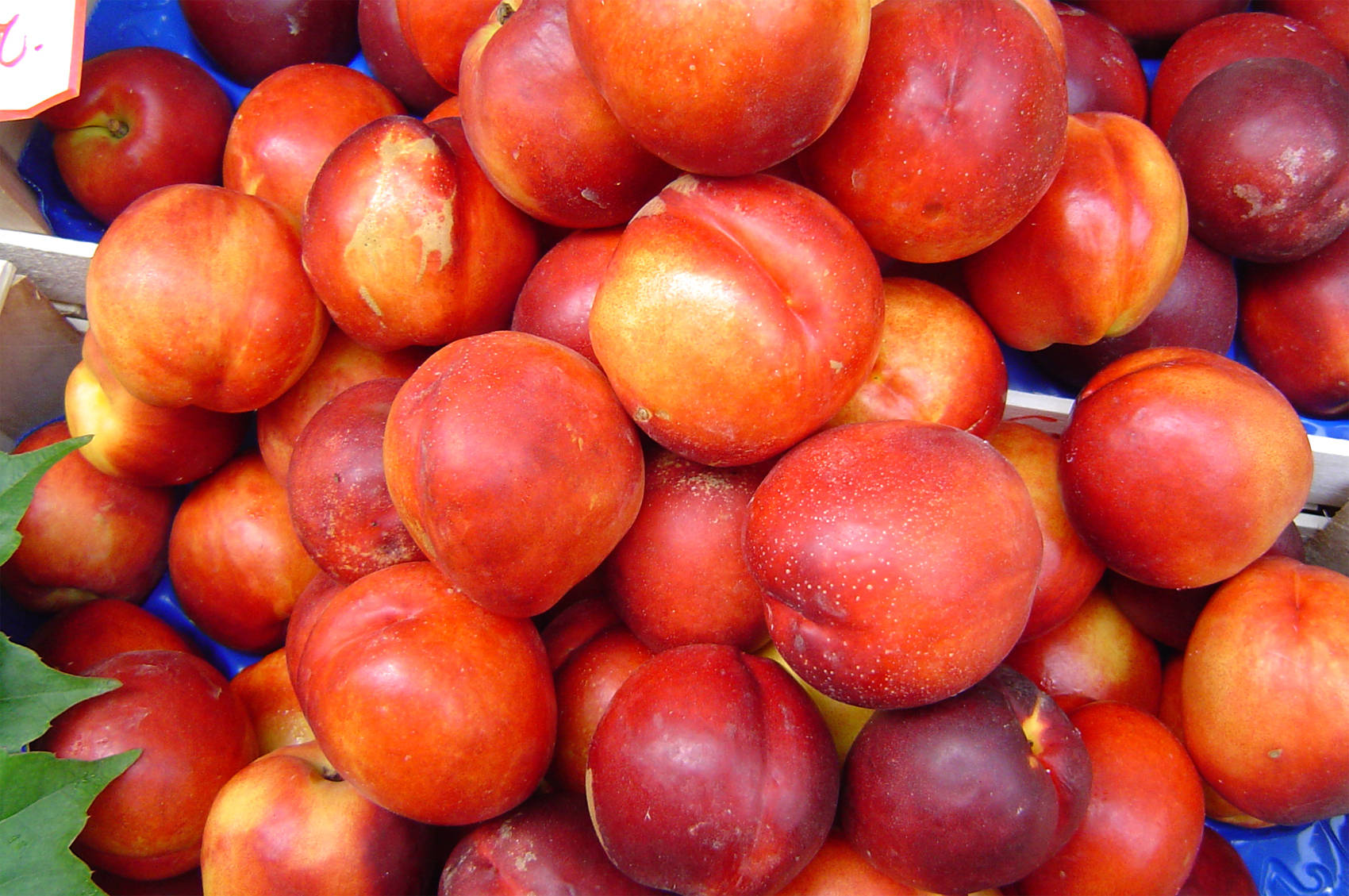 Amazing Nectarine Pictures & Backgrounds