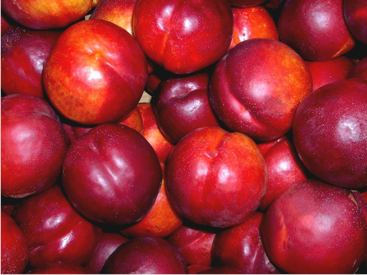 Images of Nectarine | 1199x899