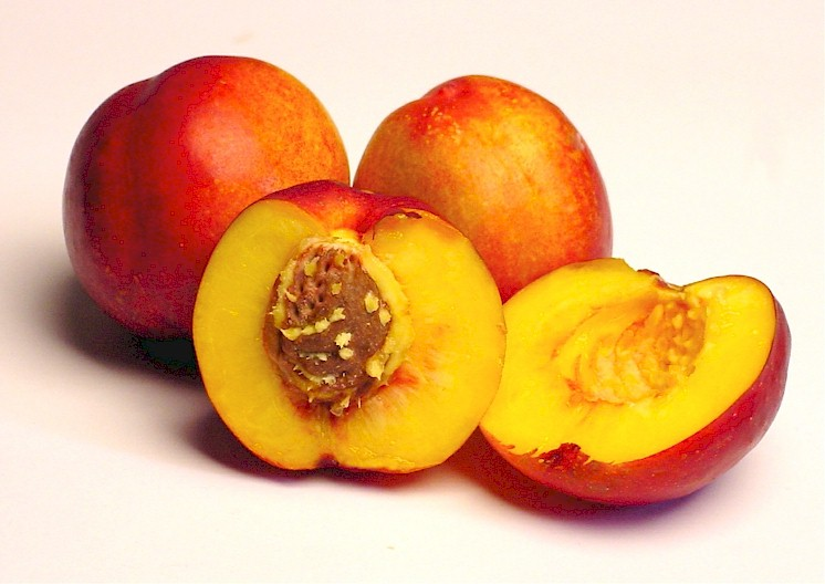 Nectarine Backgrounds, Compatible - PC, Mobile, Gadgets| 746x528 px