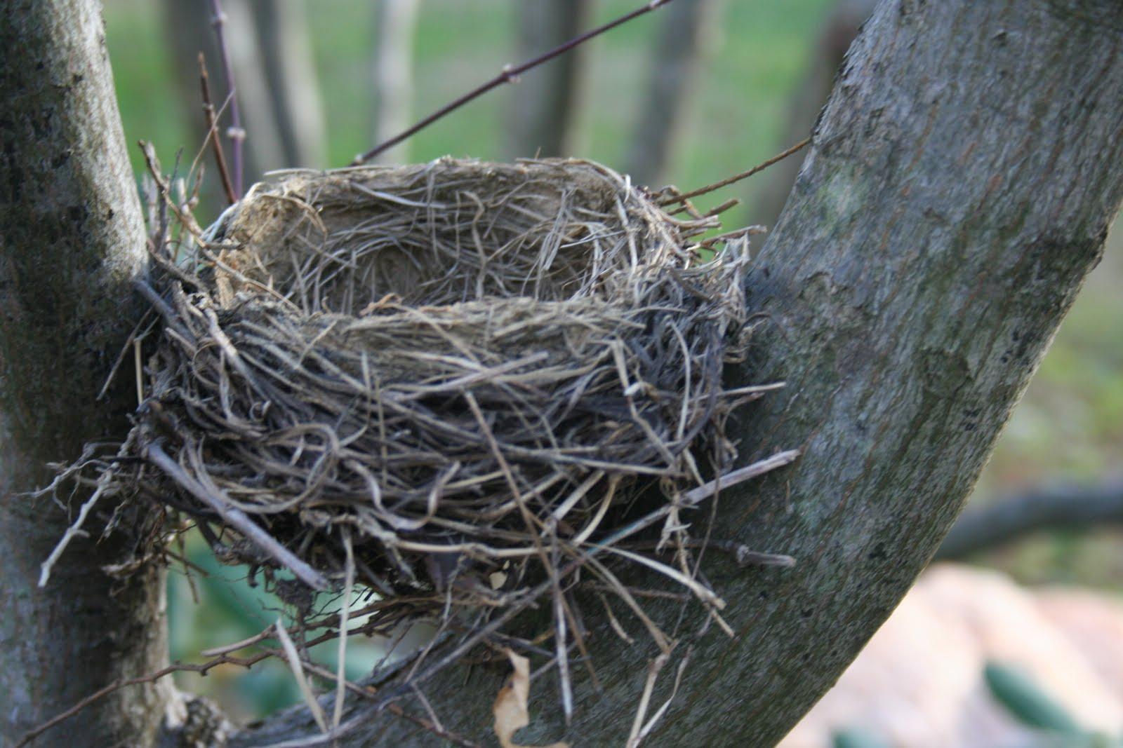заставке картинки гнезда птиц на дереве рауф