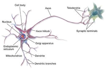 Neuron Backgrounds, Compatible - PC, Mobile, Gadgets  350x226 px