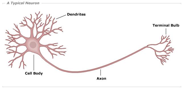 Neuron HD wallpapers, Desktop wallpaper - most viewed