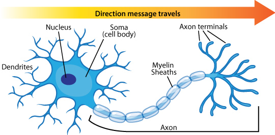 Amazing Neuron Pictures & Backgrounds