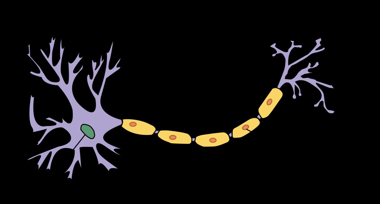 1280x688 > Neuron Wallpapers