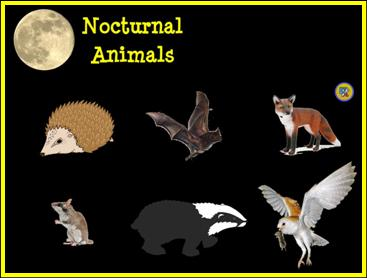 Images of Nocturnal Animals | 367x278