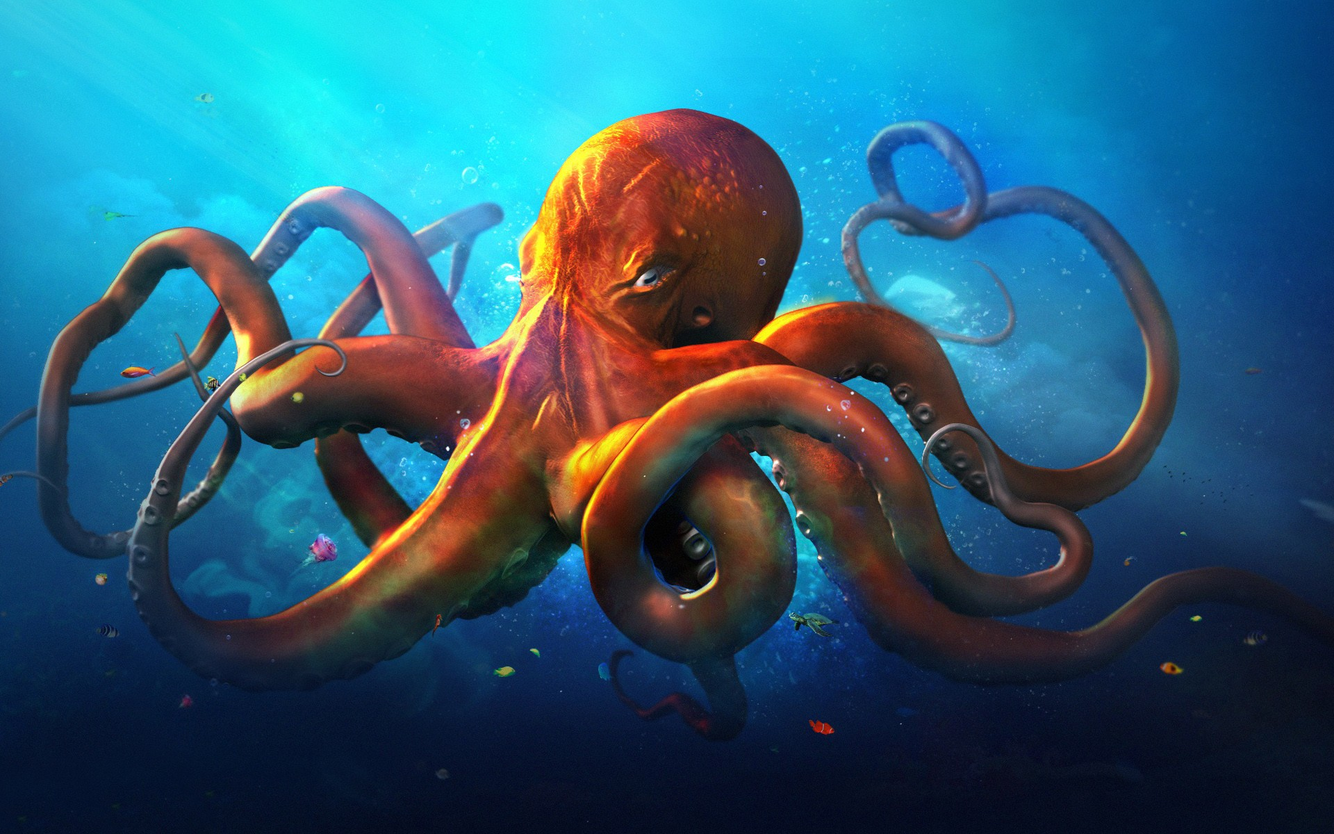Octopus High Quality Background on Wallpapers Vista