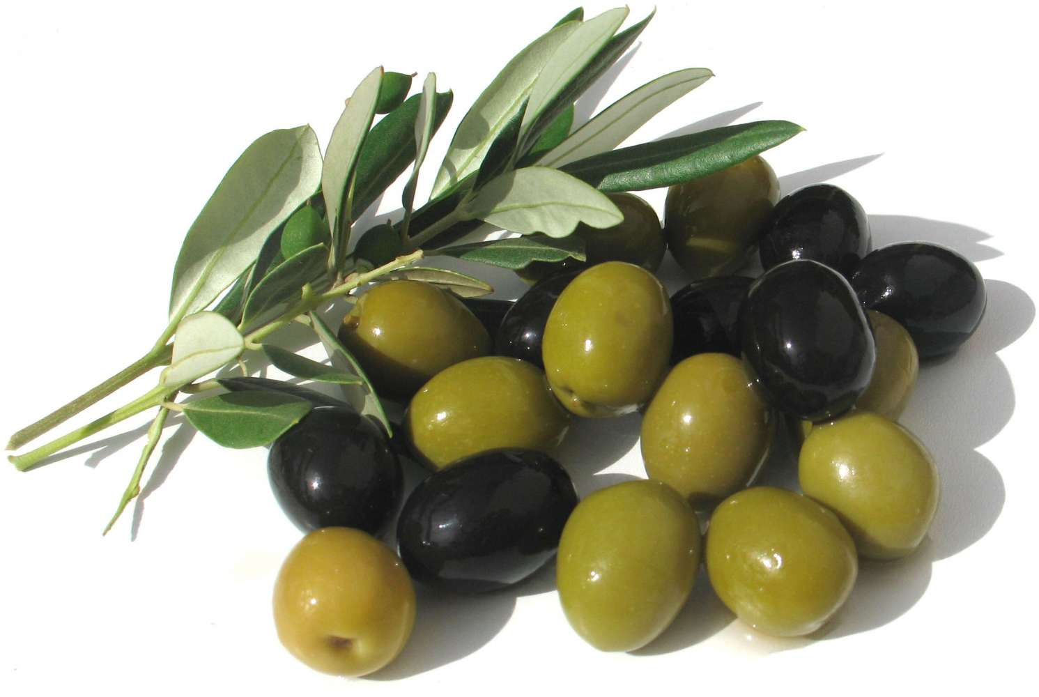 Olive Backgrounds on Wallpapers Vista