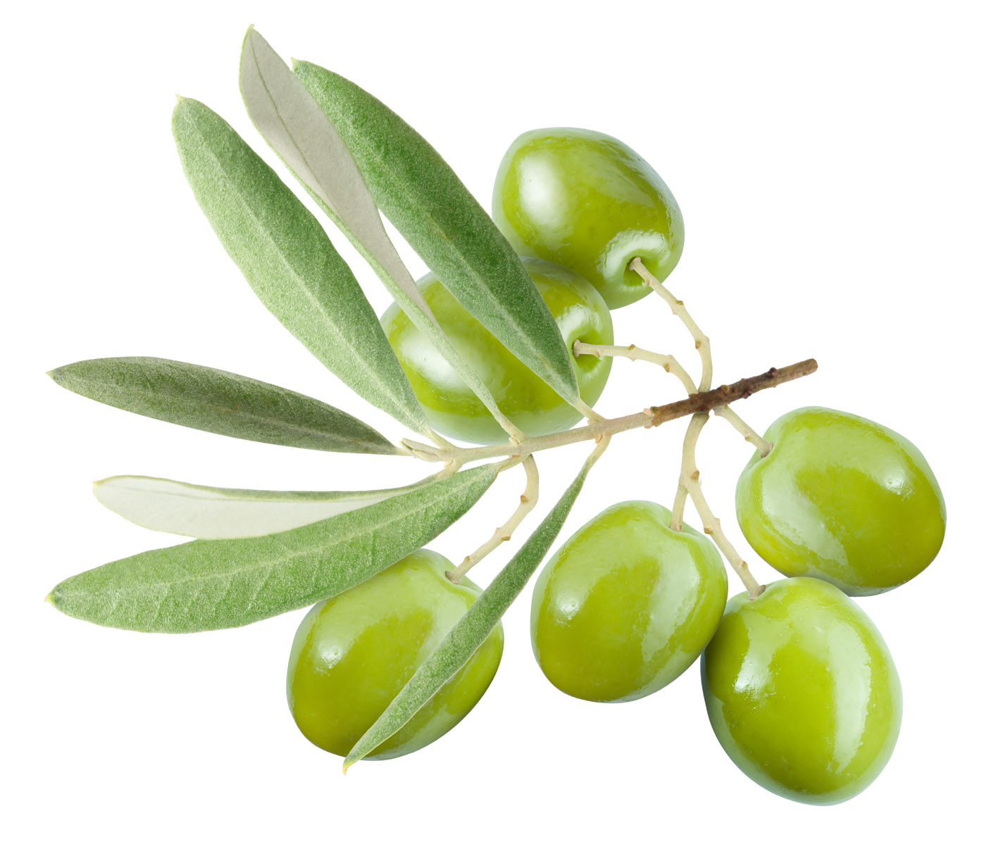Olive High Quality Background on Wallpapers Vista