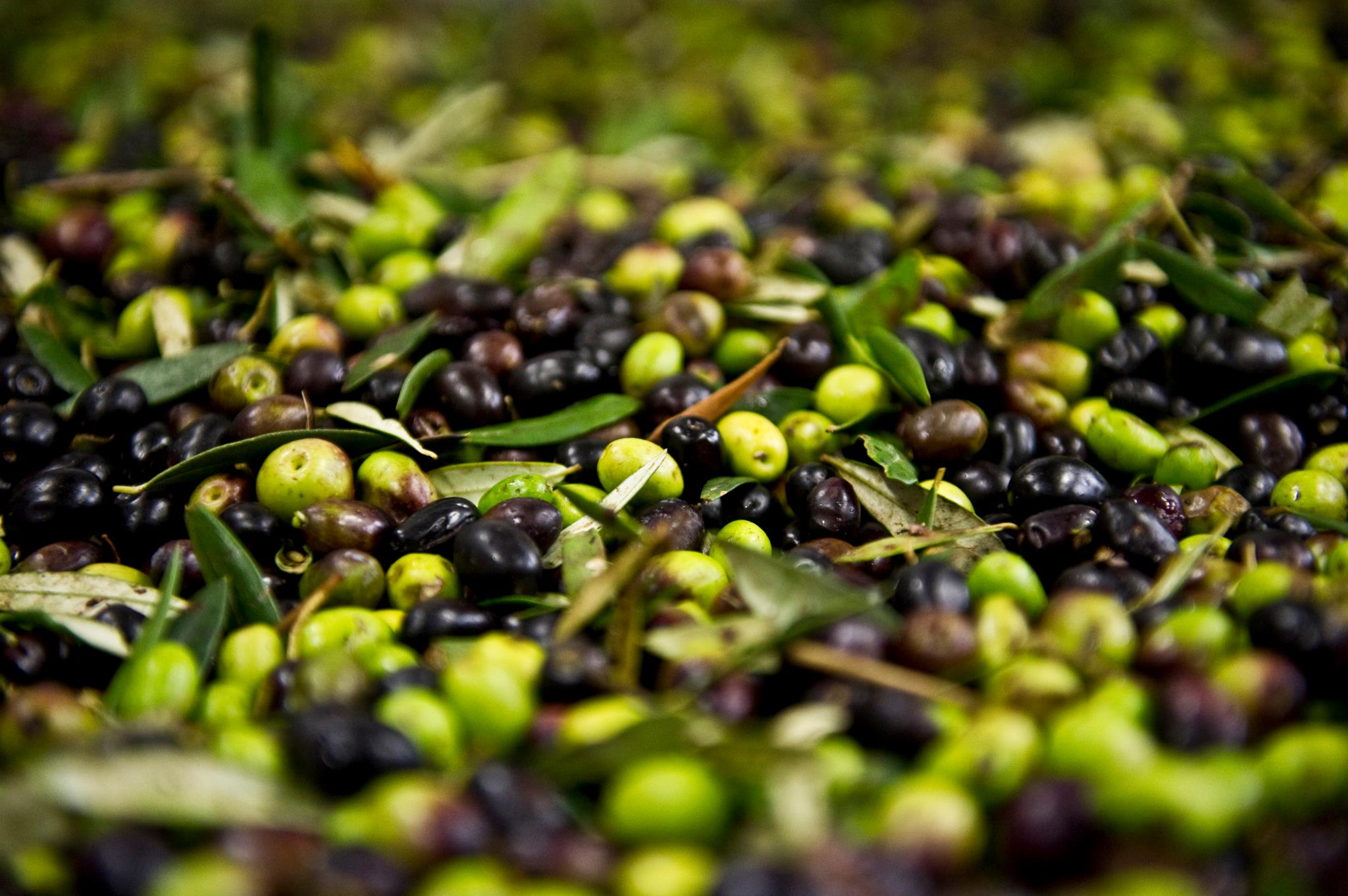 Olive HD wallpapers, Desktop wallpaper - most viewed