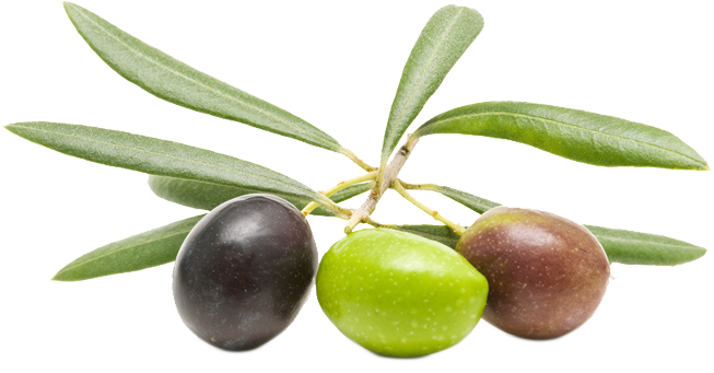 653x341 > Olive Wallpapers