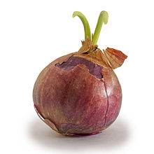 HQ Onion Wallpapers | File 8.69Kb