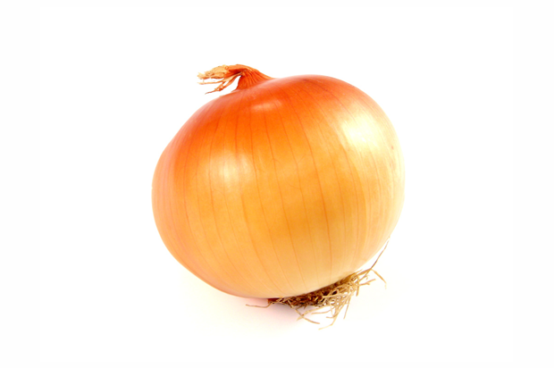 Onion High Quality Background on Wallpapers Vista