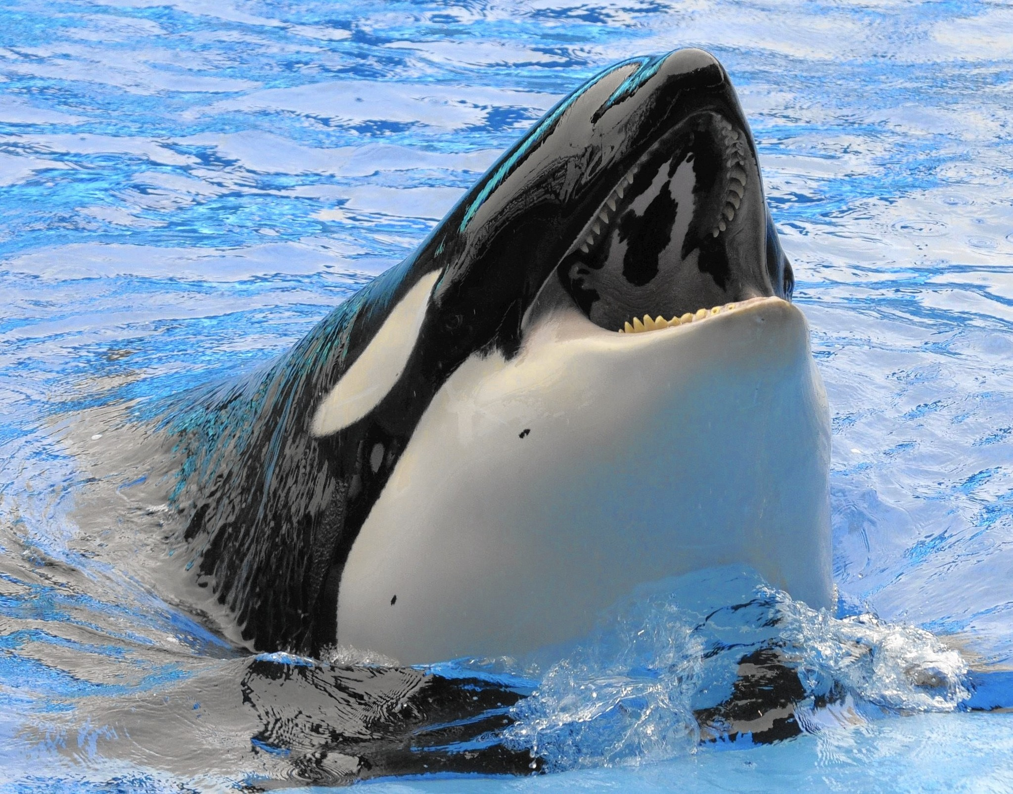 Nice wallpapers Orca 2048x1605px