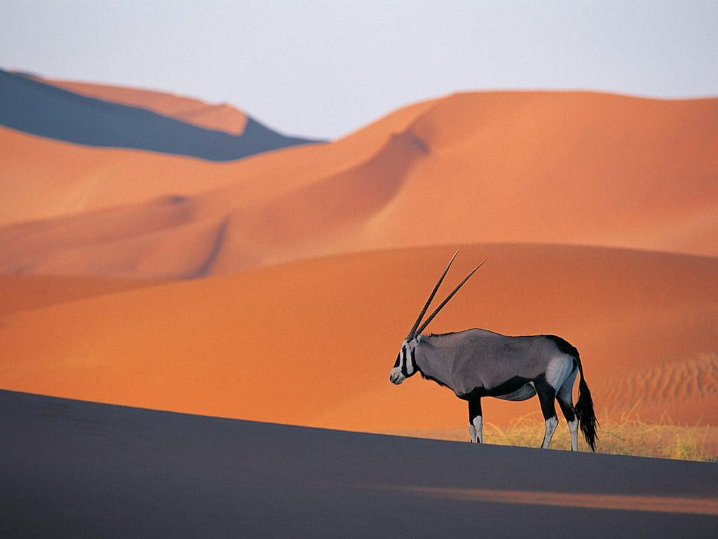 Oryx Pics, Animal Collection