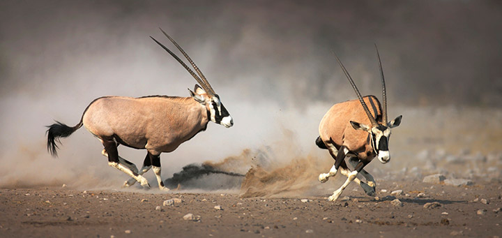 Images of Oryx | 720x341