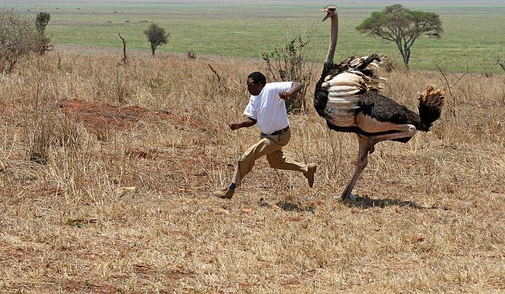 Ostrich #16