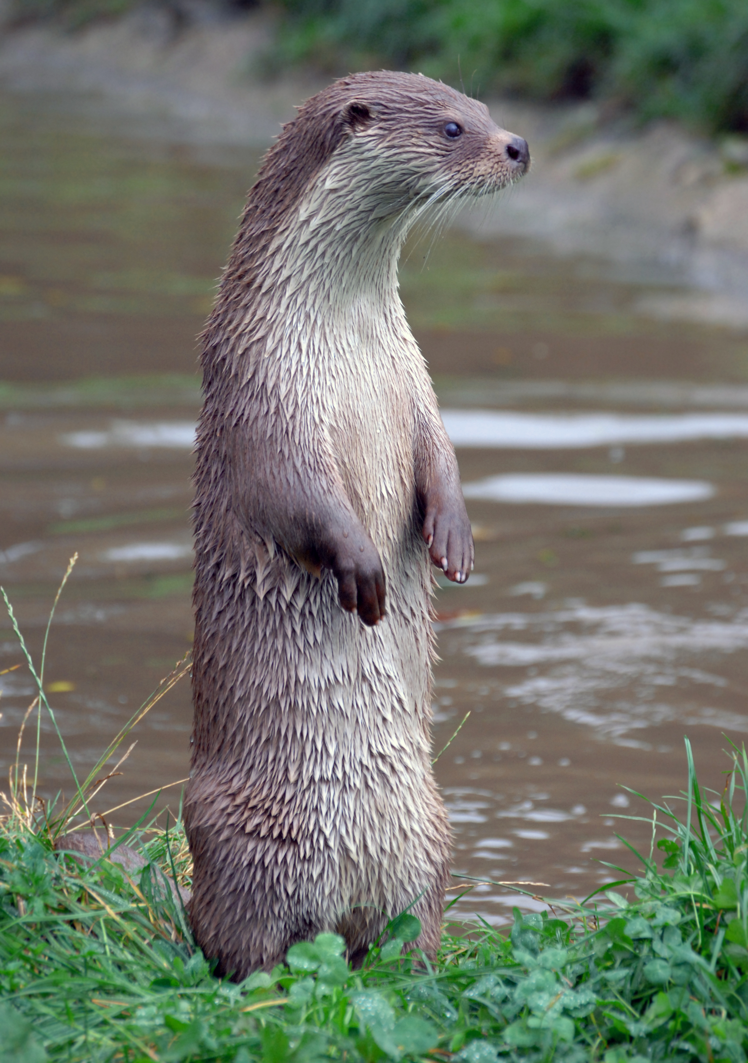 Nice wallpapers Otter 2848x4048px