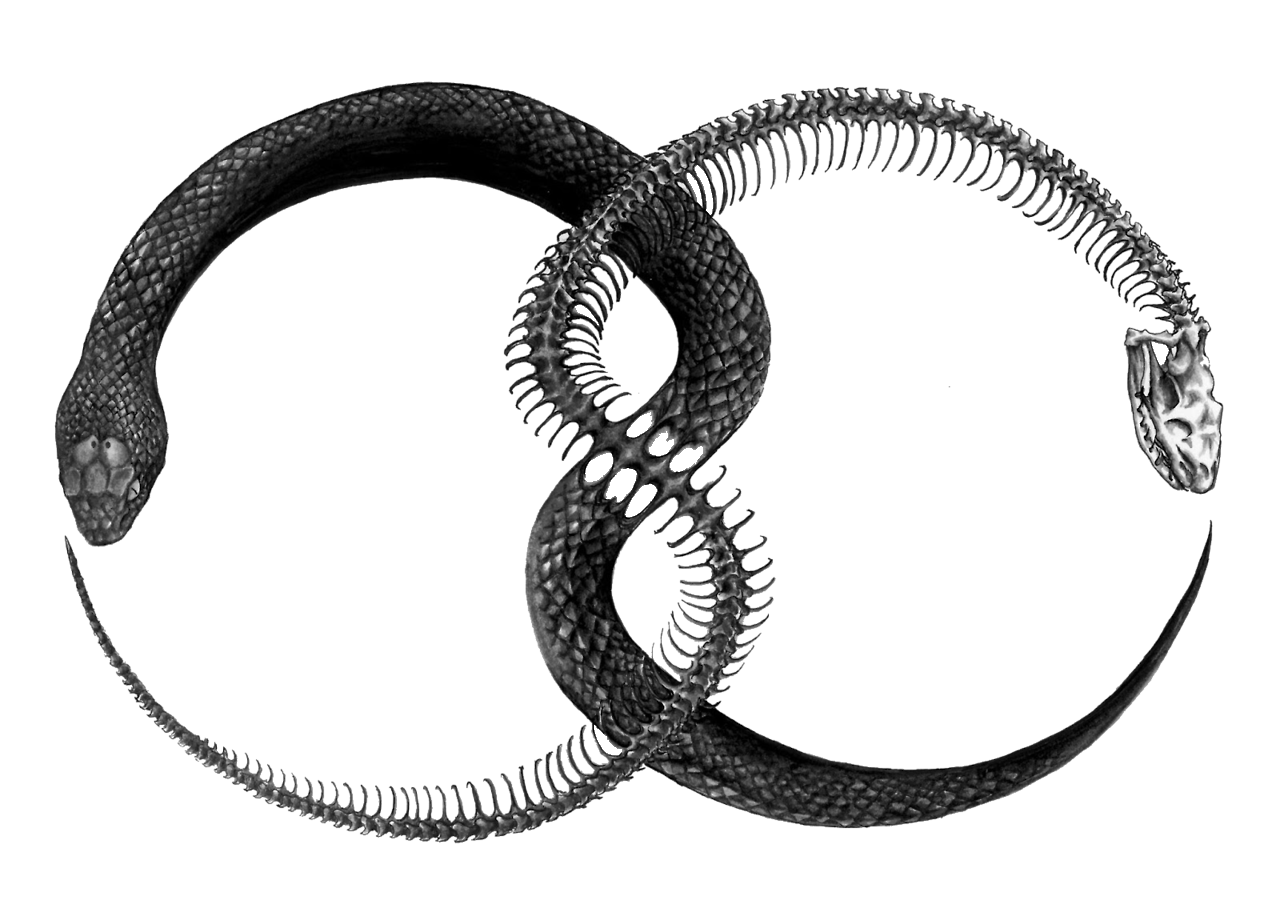 Amazing Ouroboros Pictures & Backgrounds
