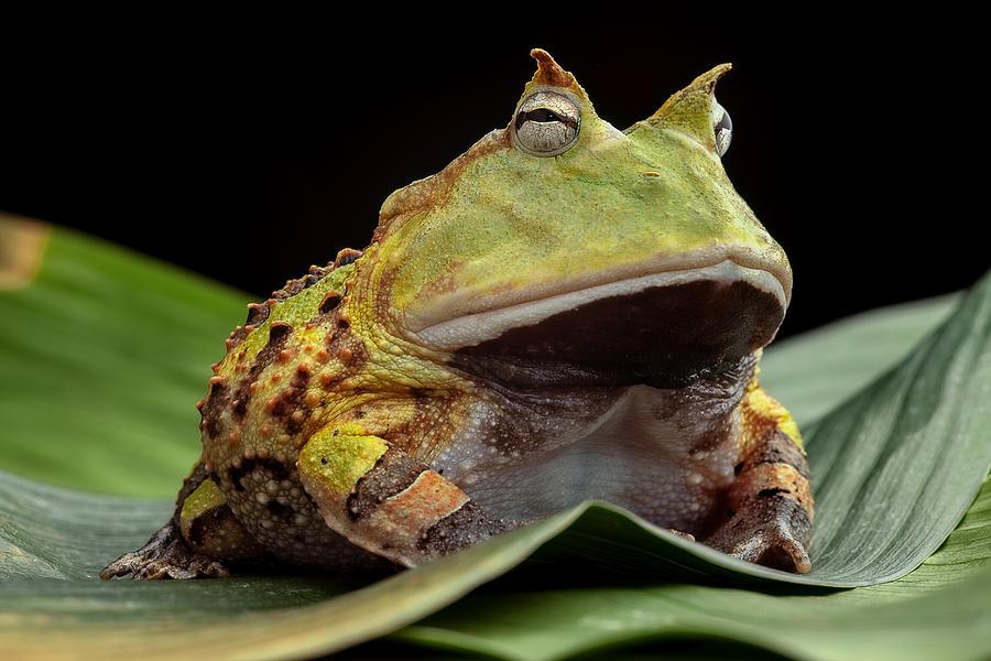 High Resolution Wallpaper | Pac-man Frog 900x600 px