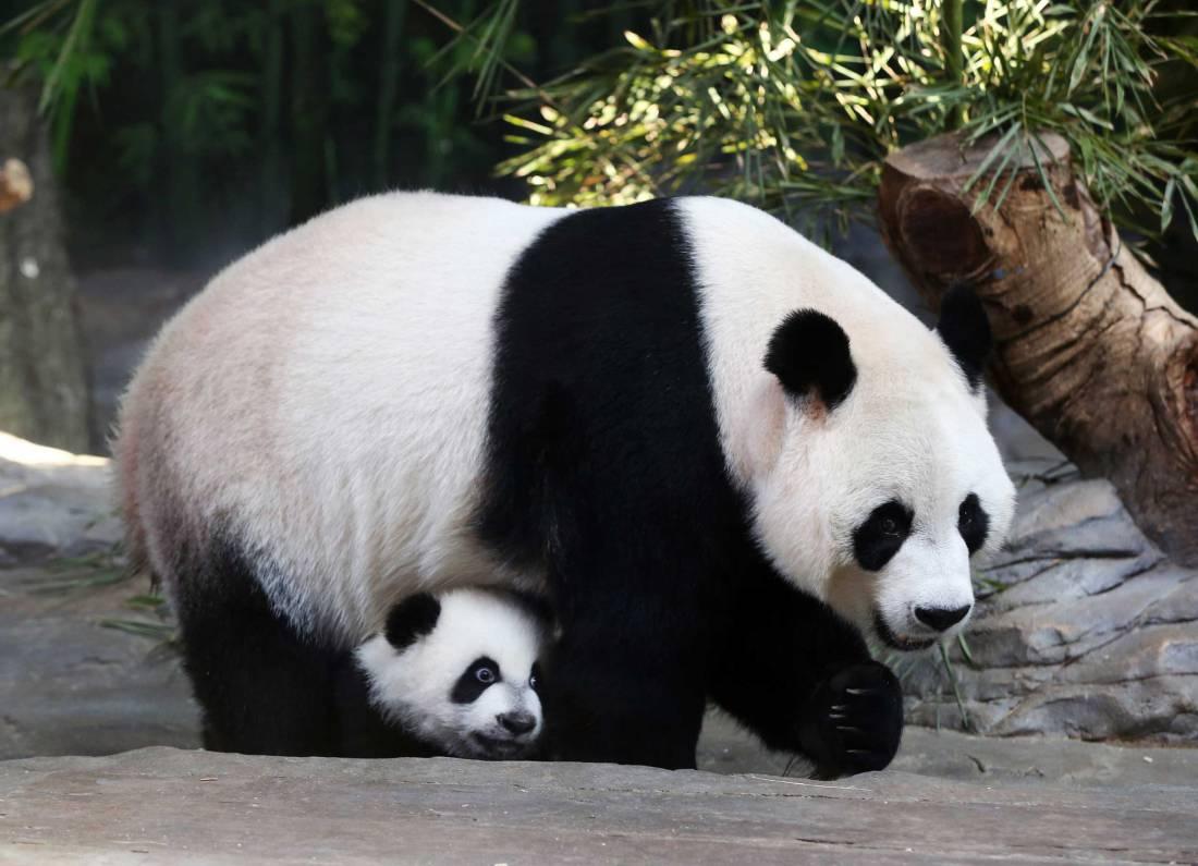 Panda #7