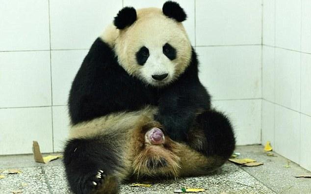 Images of Panda | 634x395