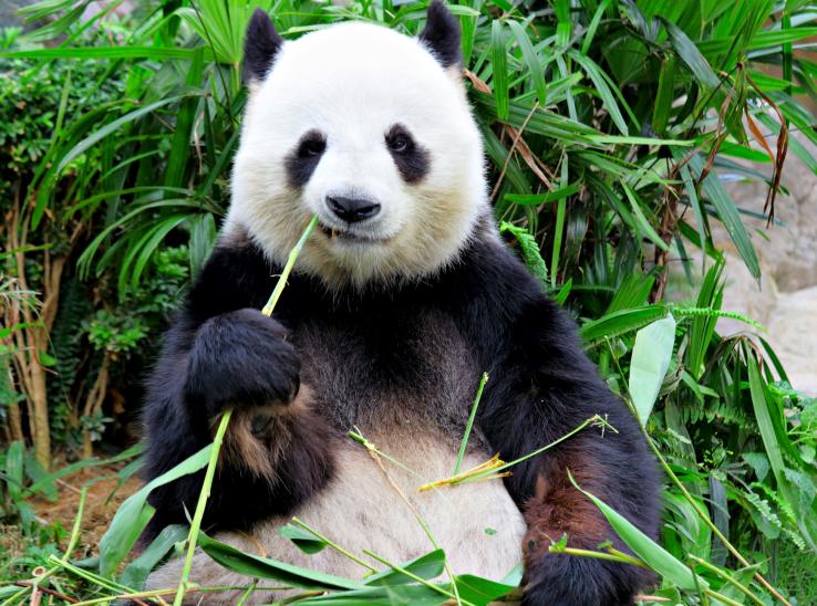 Panda #14