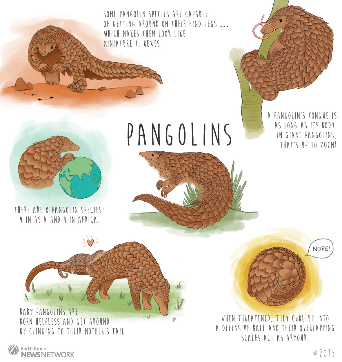 HQ Pangolin Wallpapers | File 327.84Kb