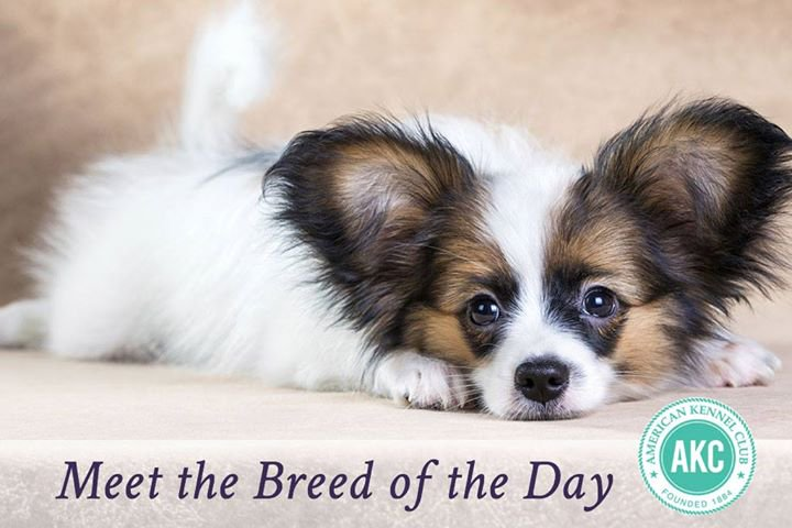 Papillon Backgrounds on Wallpapers Vista