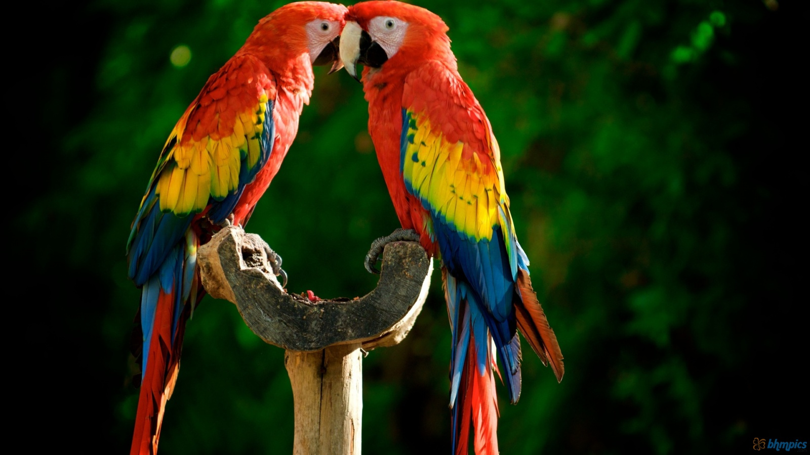 HQ Parrot Wallpapers | File 291.36Kb