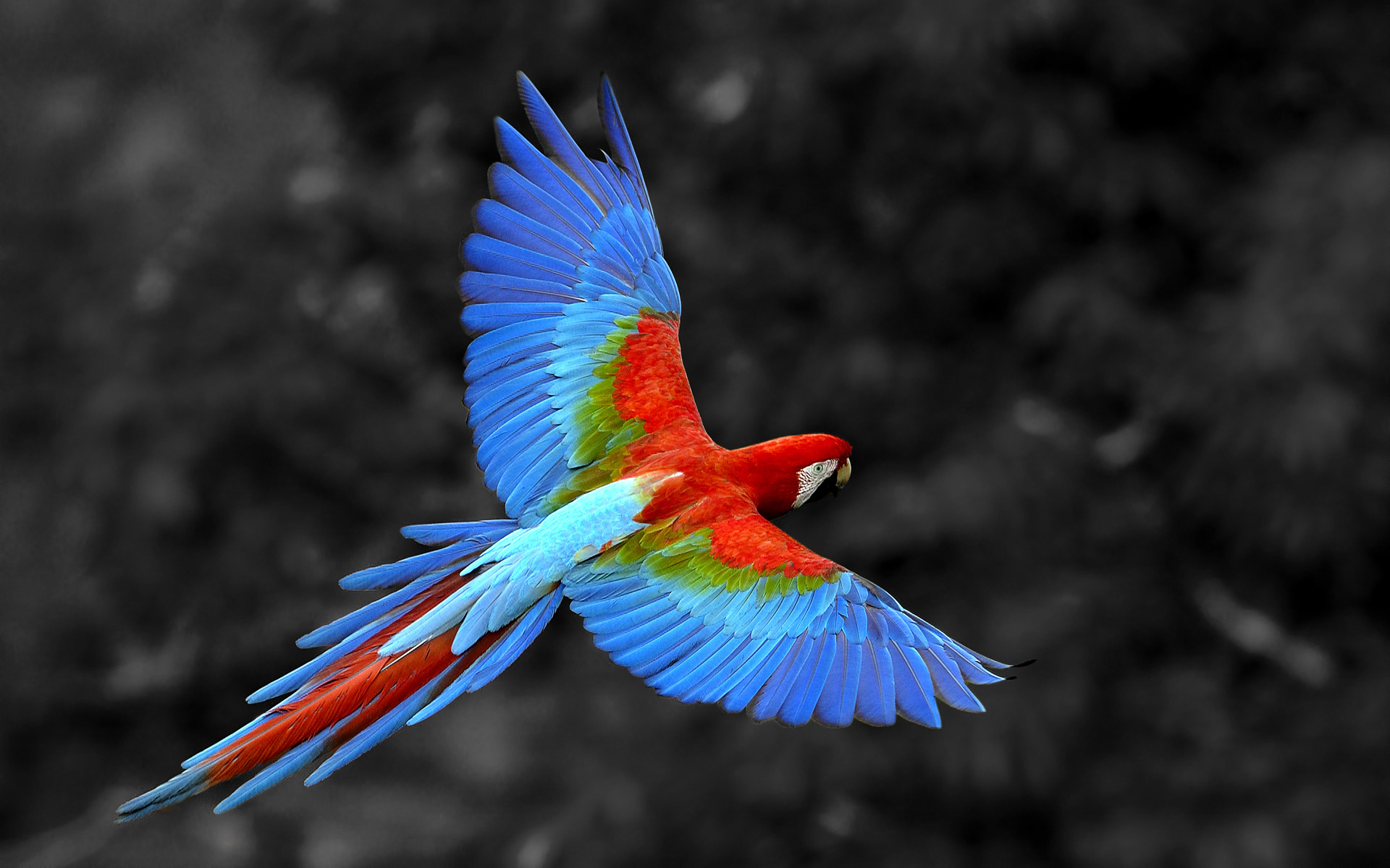 HD Quality Wallpaper | Collection: Animal, 1920x1200 Parrot